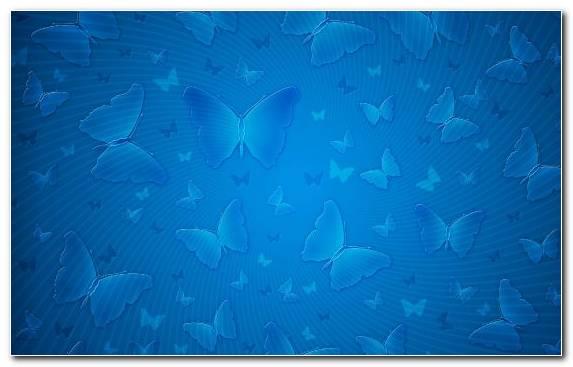 Image Water Underwater Marine Biology Azure Turquoise