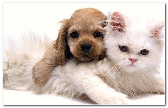 Image Whiskers Cat Puppy Puppy Love Animal Shelter