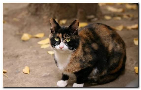 Image whiskers cat ragdoll fur moustache