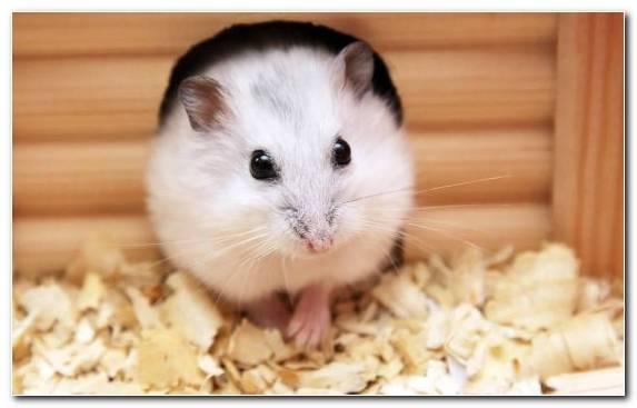 Image whiskers dog food rat moustache pet food
