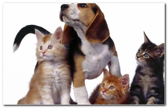 Image Whiskers Dog Like Mammal Moustache Cat Kitten