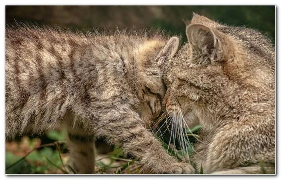 Image whiskers grasses wildcat cat kitten