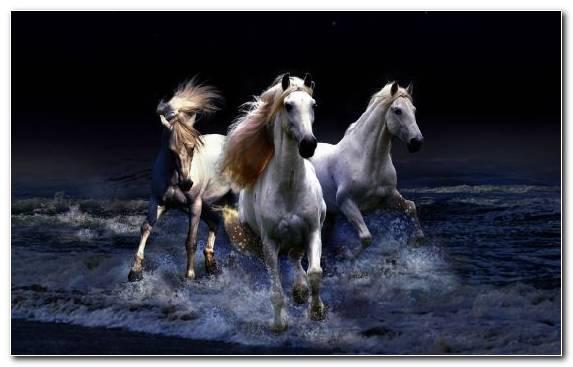Image White Horses Herd Mane Black