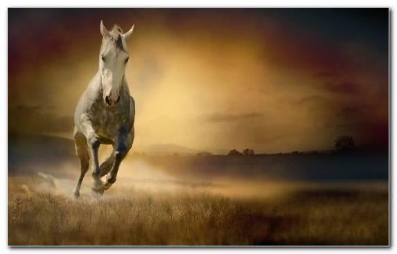 Image White Mane Horse Racing Horse Sky