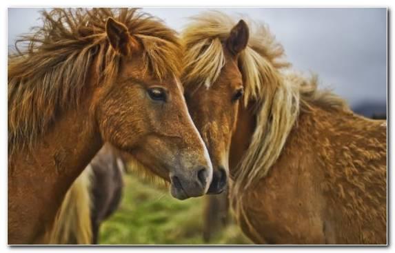 Image White Stallion Rearing Mane Mustang Horse