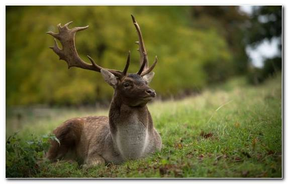Image white tailed deer antler terrestrial animal wildlife animal