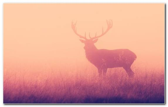 Image White Tailed Deer Antler Wildlife Elk Sky