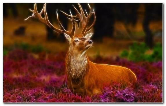 Image White Tailed Deer Reindeer Deer Antler Wildlife