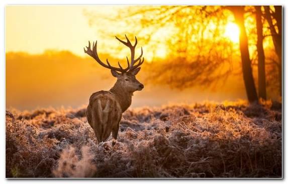 Image White Tailed Deer Reindeer Tree Deer Grasses