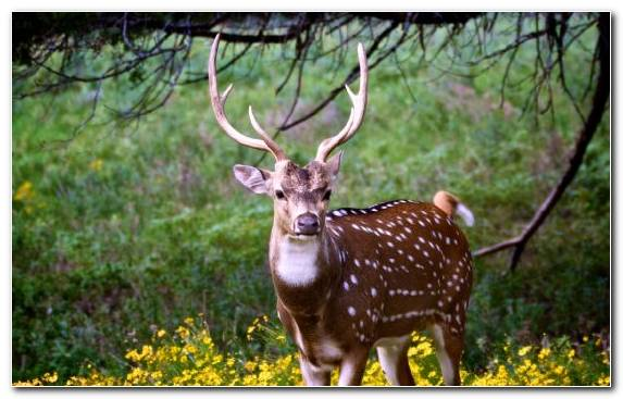 Image White Tailed Deer Wildlife Nature Reserve Antler Moscow