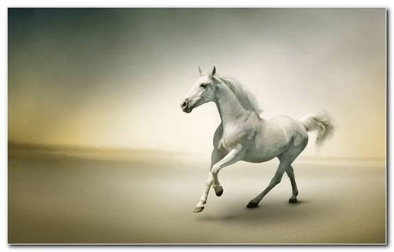Image White White Horse Wild Horse Horses Mustang Horse
