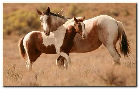 Image Wild Horse Grassland Horses Mare Ecosystem