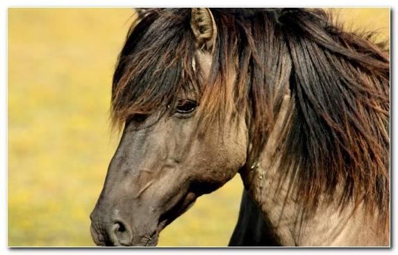 Image wild horse mare stallion bridle snout