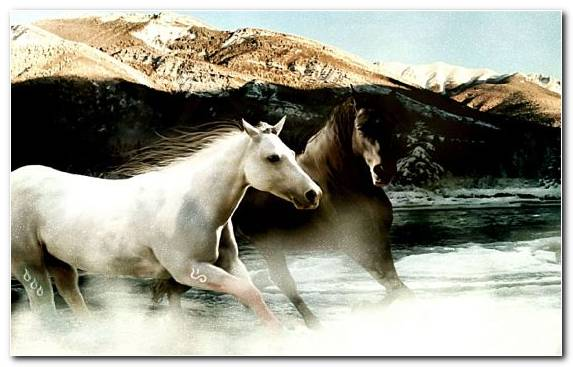 Image Wild Horse Mare Wildlife Pack Animal Mane