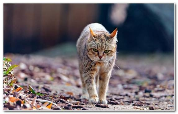 Image wildcat kitten snout walking wildlife