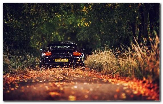 Image Wilderness Porsche 911 Gt3 Desert Porsche Woody Plant