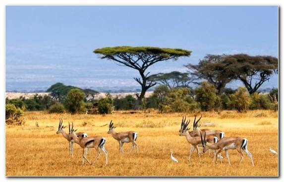 Image Wilderness Safari Travel Grazing Ecosystem