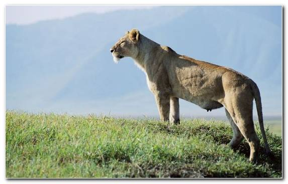 Image Wilderness Serengeti Ecosystem Fauna Terrestrial Animal