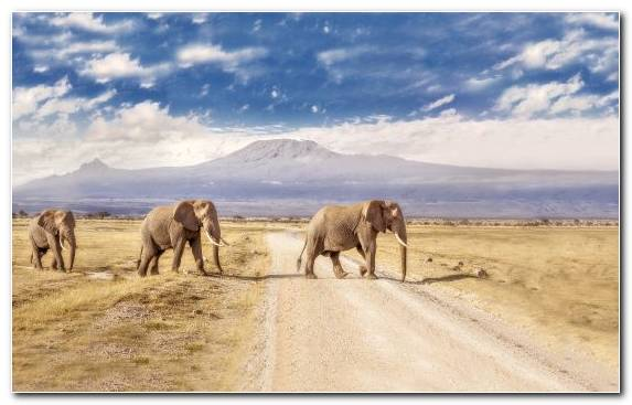 Image wilderness travel ecosystem desert savanna