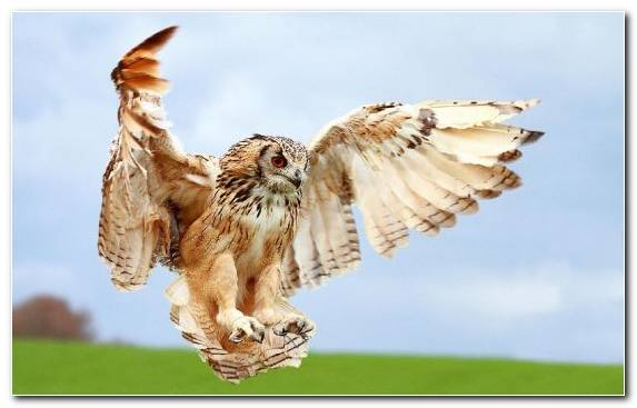 Image Wildlife Beak Buzzard Owl Falcon