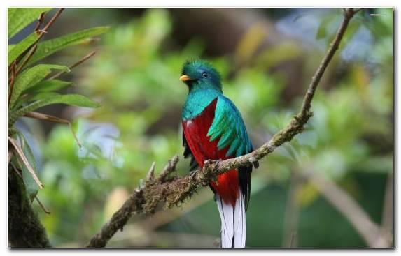 Image wildlife beak ecosystem hotel bird