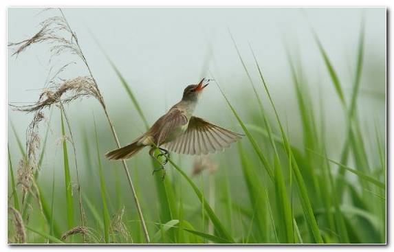 Image wildlife bird ecosystem insect grass family