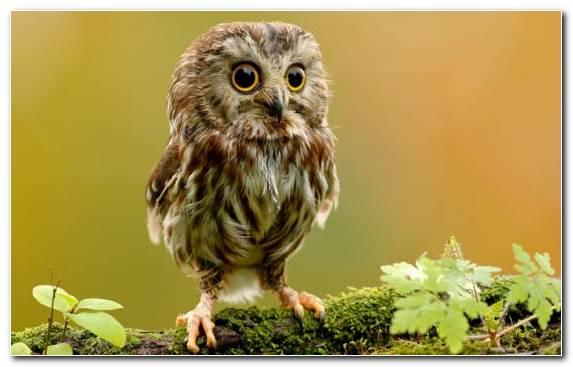 Image wildlife bird of prey bird beak owl