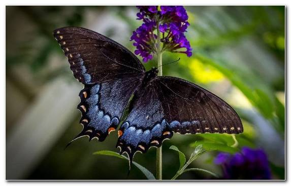 Image Wildlife Brush Footed Butterfly Lycaenid Nectar Pollinator