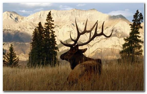 Image Wildlife Canvas Reindeer Painting Creative Arts
