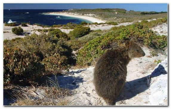 Image Wildlife Cape Nature Reserve Plant Community Rodent