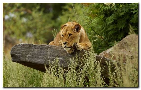 Image Wildlife Cat Big Cats Cuteness Zoo