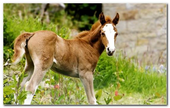 Image Wildlife Colt Pack Animal Mare Terrestrial Animal