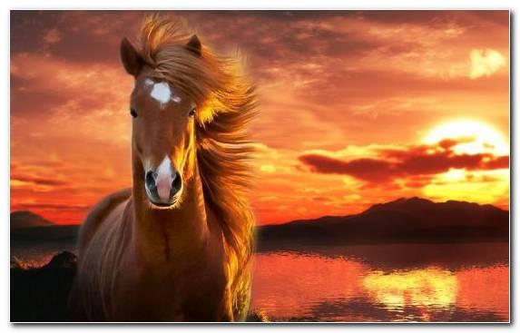 Image Wildlife Ecoregion Sky Mustang Horse Horses