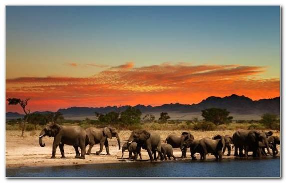 Image wildlife elephant grassland herd grazing