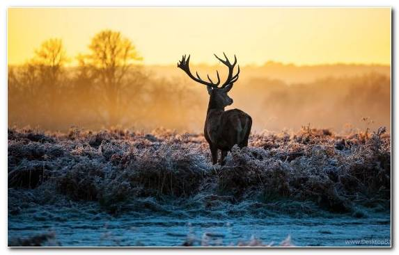 Image Wildlife Elk Animal Morning Sunlight