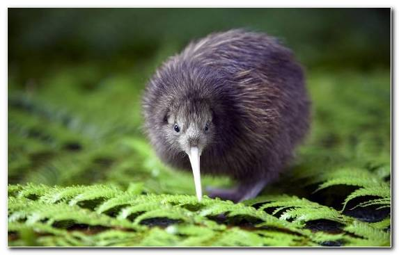 Image Wildlife Flight Flightless Bird Muroidea Mouse