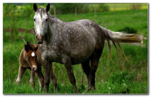 Image Wildlife Foal Stallion Wild Horse Animal
