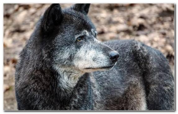 Image Wildlife Fur