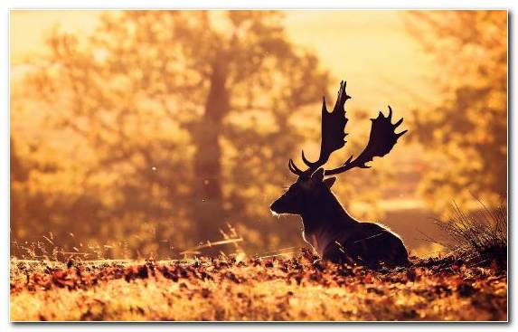 Image Wildlife Grass Autumn Deer Morning