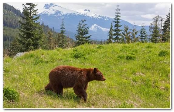 Image Wildlife Grazing Turquoise Lake Travel Vancouver Island