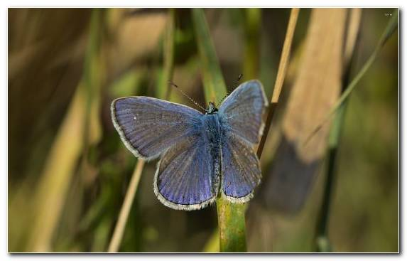 Image wildlife insect brush footed butterfly butterfly blue
