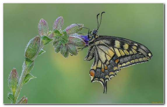Image wildlife invertebrate pollinator insect butterfly