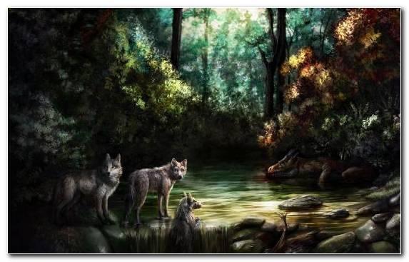 Image Wildlife Jungle Woodland Forest Tree