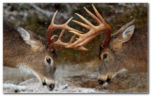 Image Wildlife Lawn Kitchen Mat Antler