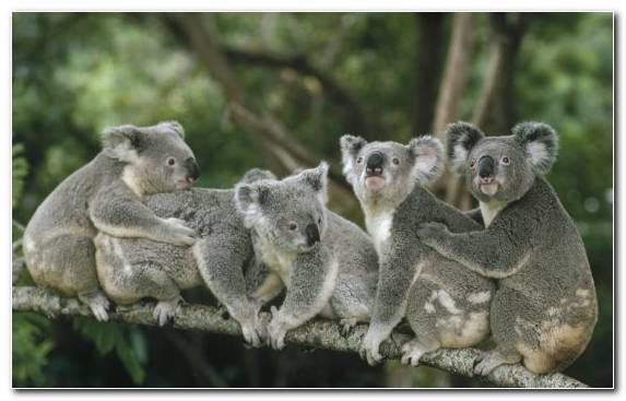 Image wildlife macaque terrestrial animal marsupial Jigsaw Puzzles