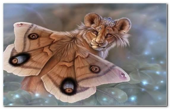 Image wildlife moustache butterfly snout cat