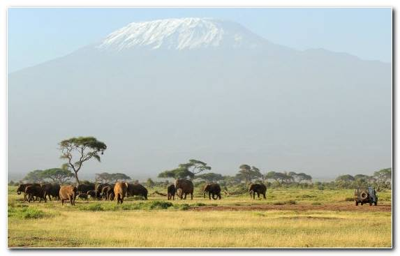 Image Wildlife Nature Reserve Desert Mount Kilimanjaro Wilderness