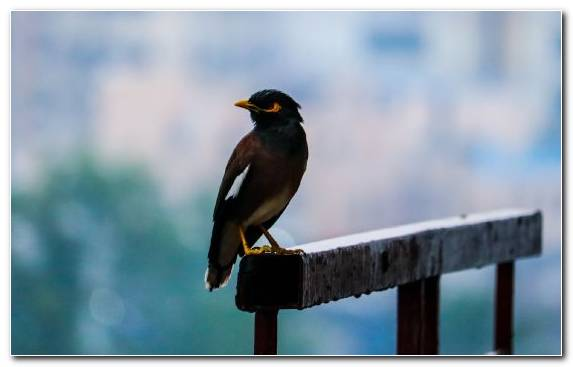 Image Wildlife Perching Bird Dog Like Mammal Wing Passerine
