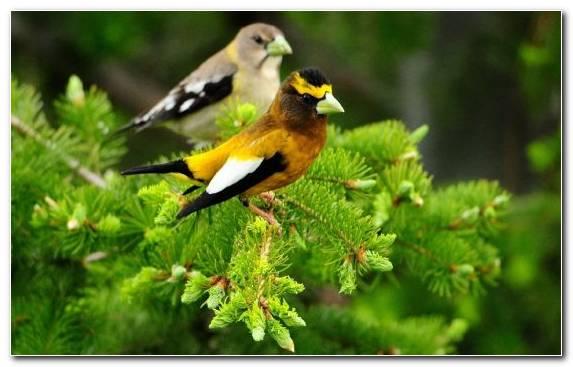 Image Wildlife Perching Bird Flora Cat Parrot