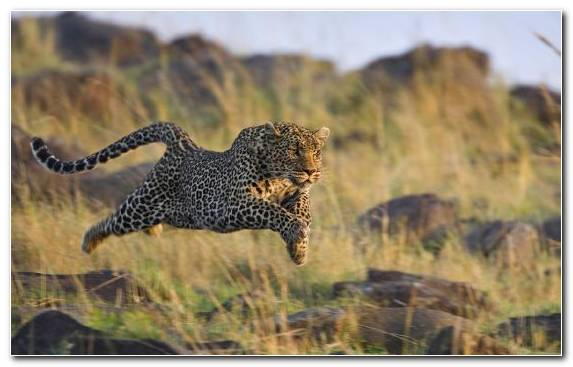 Image wildlife serengeti terrestrial animal ecosystem wilderness